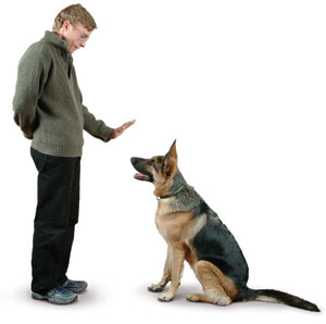Dog-training-coomands