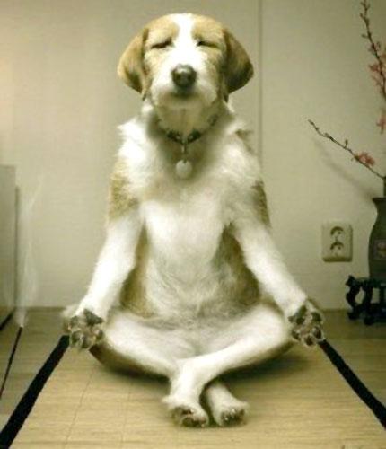 Yoga_Doggie_Style