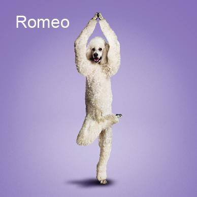 Yoga-dogs-22