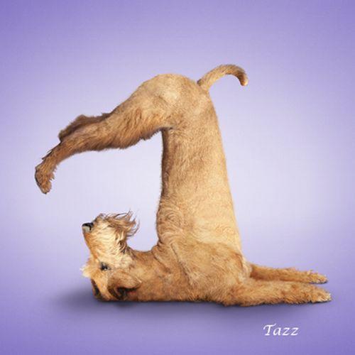Yoga-dogs-12