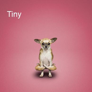 Yoga-dogs-16